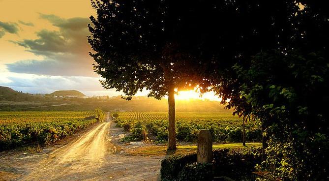 Atardecer en los Viñedos del Contino. Laserna. La Rioja.