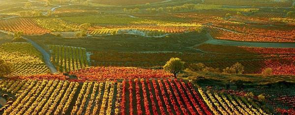 viñedos Rioja. Consejo de la Alta
